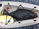 14 pound Halibut  Cook Inlet, AK_1