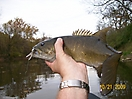 River Smallmouth in OH_2