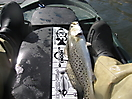 trout!_1