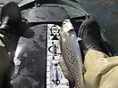 trout!_1