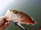 A little bass from the kayak_1