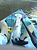 first catch Ride 135_1