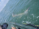 Tarpon Tales_1