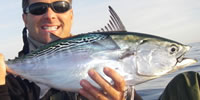 Flase Albacore From The Kayak