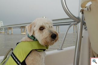 Rescue_pup_on_board_the_chase_boat