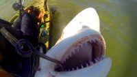 Shark Behind copy