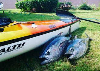 fisha500-tuna